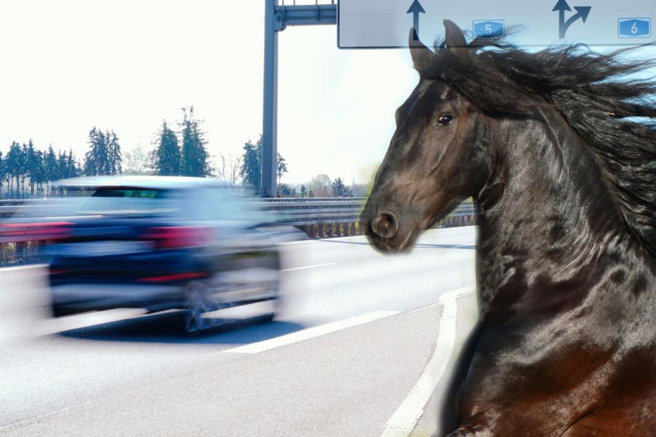 Nanu, ich glaub mich tritt ein... Pferd läuft auf Überholspur