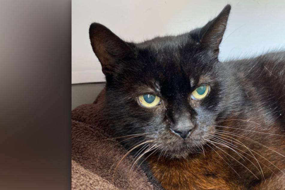 Katze Irmgard liegt im Sterben: Erlebt sie noch ein Weihnachtswunder?