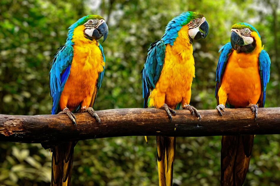 Diese Papageien habe ein skurriles Hobby: Sie beleidigen Zoobesucher
