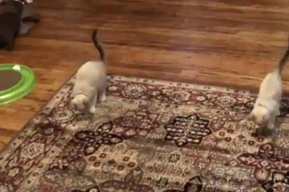 Danach springen beide Geschwister absolut synchron auf dem Bodenbelag hin und her.