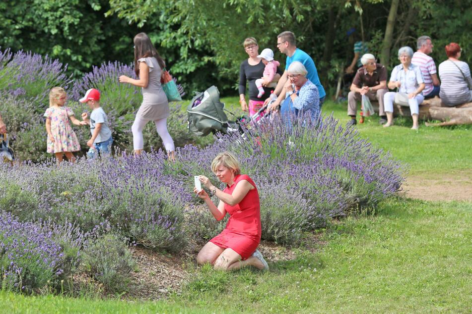 Im Tast-, Duft- und Erlebnisgarten in Zwickau gibt es immer etwas zu entdecken - so wie hier beim Lavendelfest.