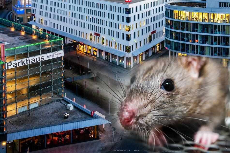 """In der Chemnitzer Innenstadt """"Am Wall"""" sind Ratten unterwegs. (Bildmontage)"""