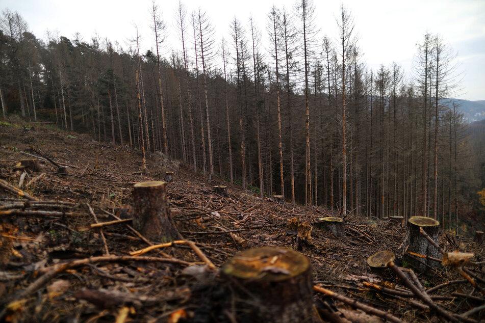 Abgeholzte Wälder in NRW: Dürre und Borkenkäfer sorgen für enormen Kahlschlag