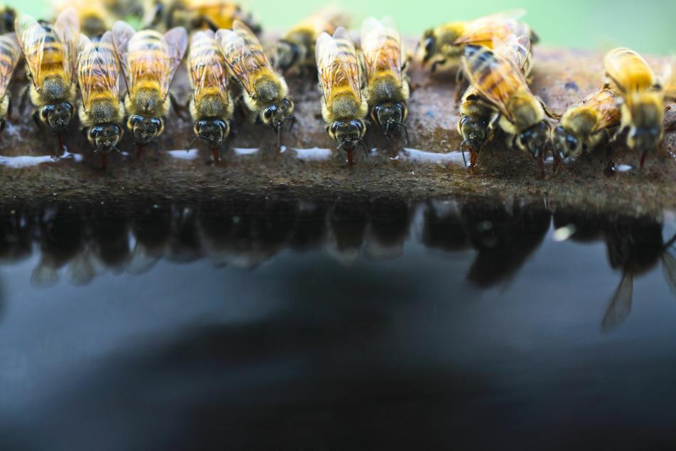 Ein Schälchen mit Wasser sowie ein paar Steine zum Landen helfen dabei, den Durst der fleißigen Bienen zu stillen.