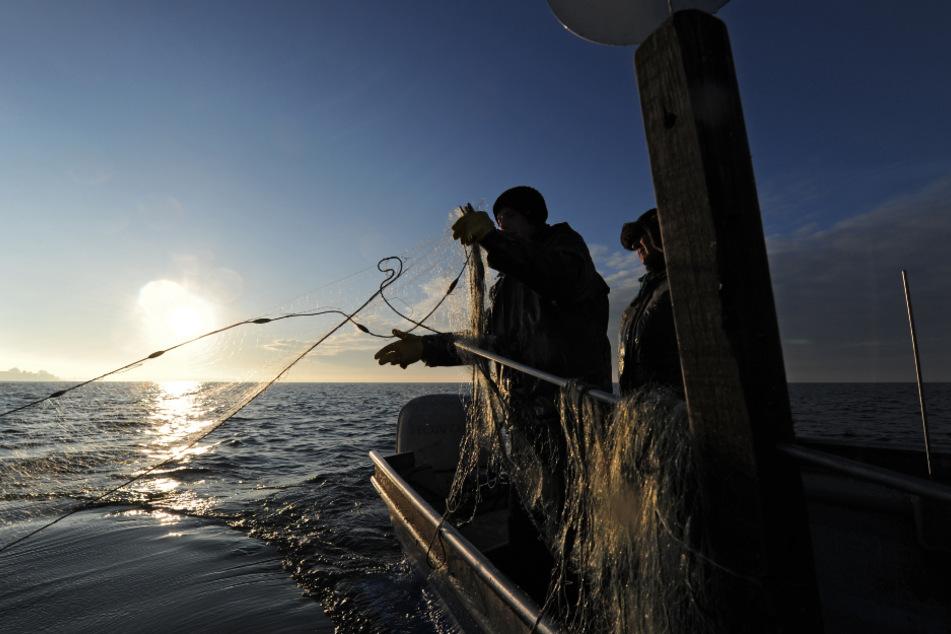 Fischer fischen von ihrem Boot im Bodensee.