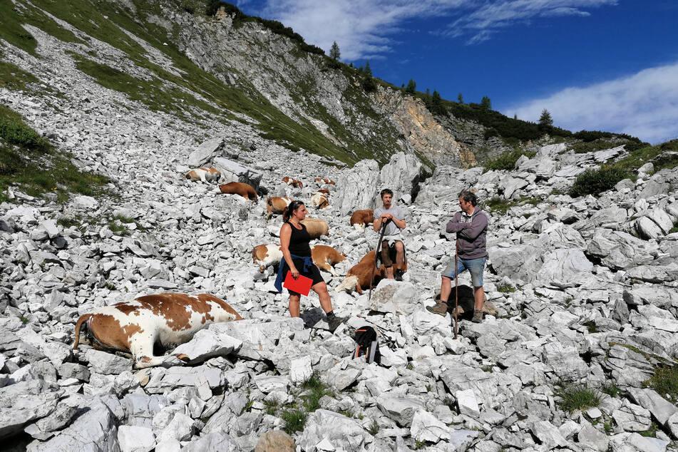 Durch Blitzschlag sind auf einer Alm in Österreich 16 Rinder getötet worden.