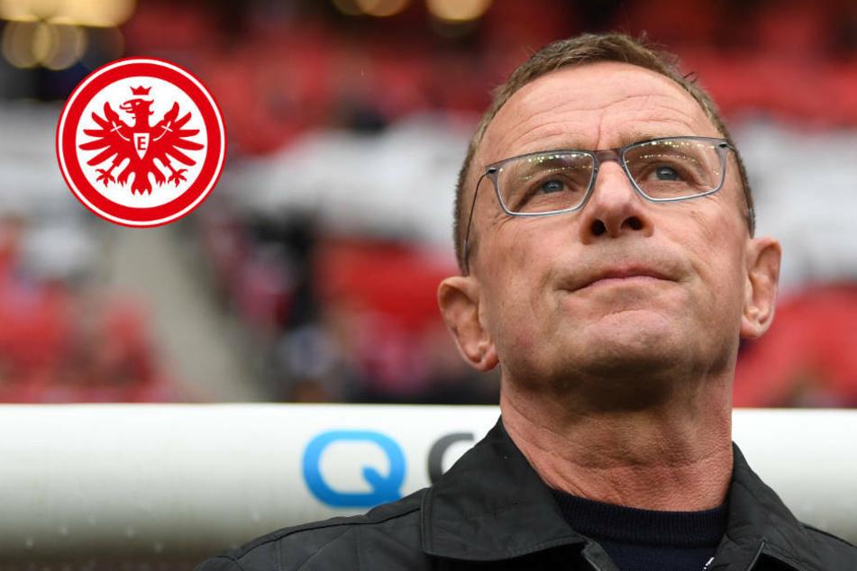 Rangnick-Hammer! Ex-Leipziger soll Bobic und Hütter bei der Eintracht beerben