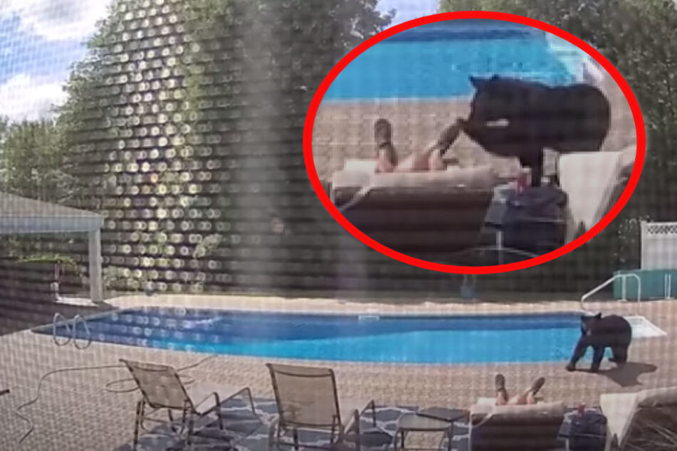 Wakey-wakey! Bear interrupts man's nap with a gentle poke