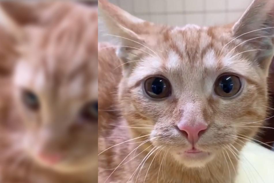 Katzen sitzen kurz nach Adoption wieder im Tierheim, der Grund macht fassungslos