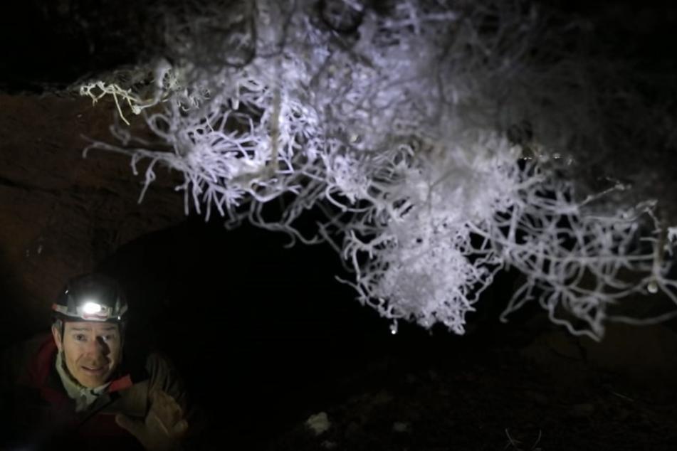 Die Kristalle sind in Höhlen ohnehin selten, sie wachsen nur sehr langsam.