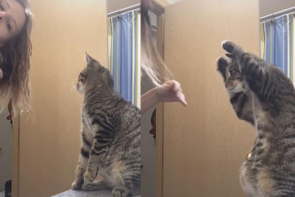 Video haut alle um: Katze imitiert Frauchen beim Haarebürsten