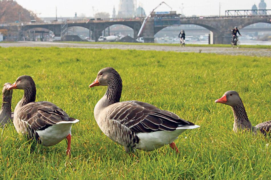 Auch das noch! Rathaus warnt vor Vogelgrippe
