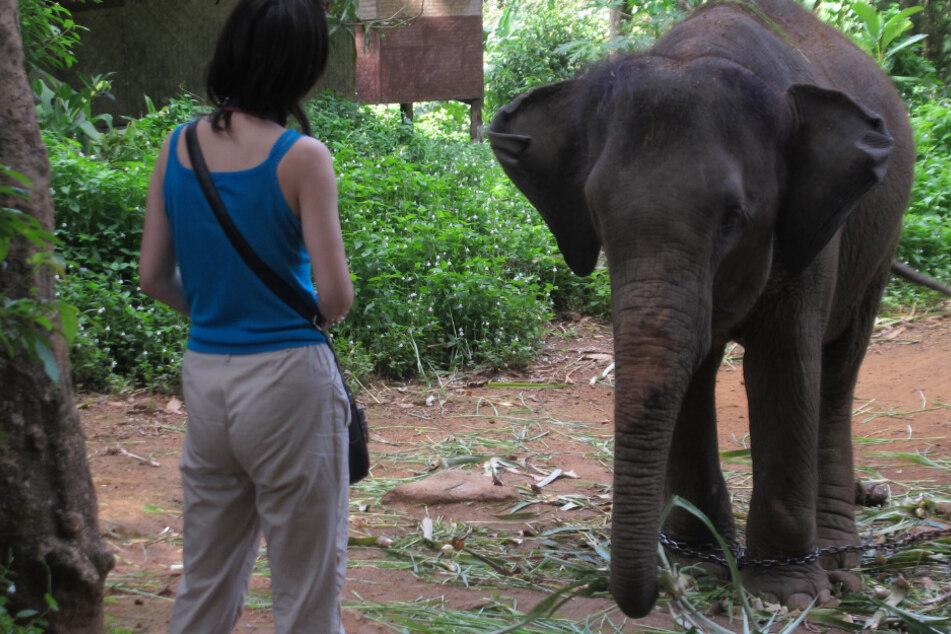 Corona lähmt Tourismus: Warum nunhunderte Elefenaten drohen zu verhungern