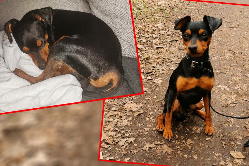 Kleiner Mann sucht neues Heim: Blacky ist der jüngste Neuzugang der Tiernothilfe Leipzig.