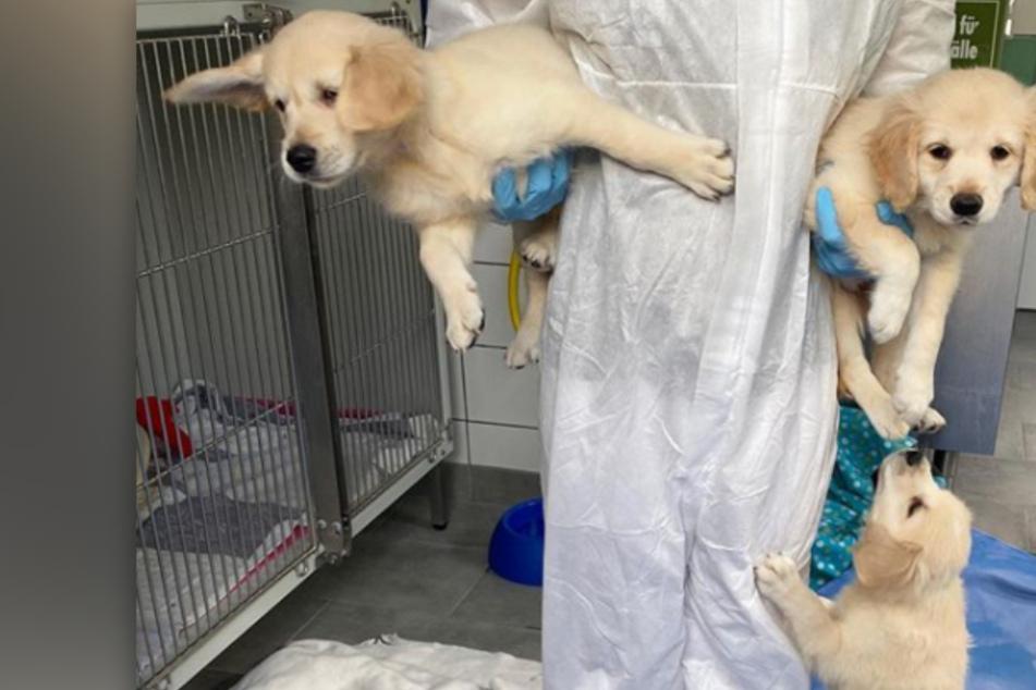 Süße Hunde-Welpen in Quarantäne: Das ist ihr schweres Schicksal