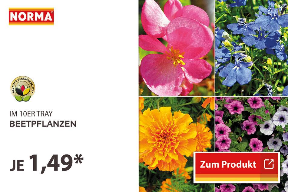 Beetpflanzen für 1,49 Euro