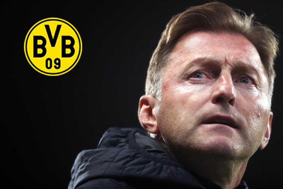 BVB-Sechser in die Premier League? Hasenhüttl heiß auf Dortmunder 10-Millionen-Schnäppchen!