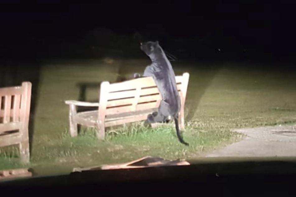 Die Polizisten staunten nicht schlecht, als die den Jaguar sahen.