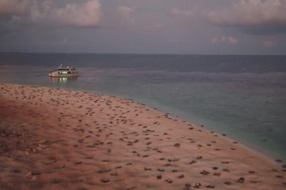 Schildkröten am Strand.