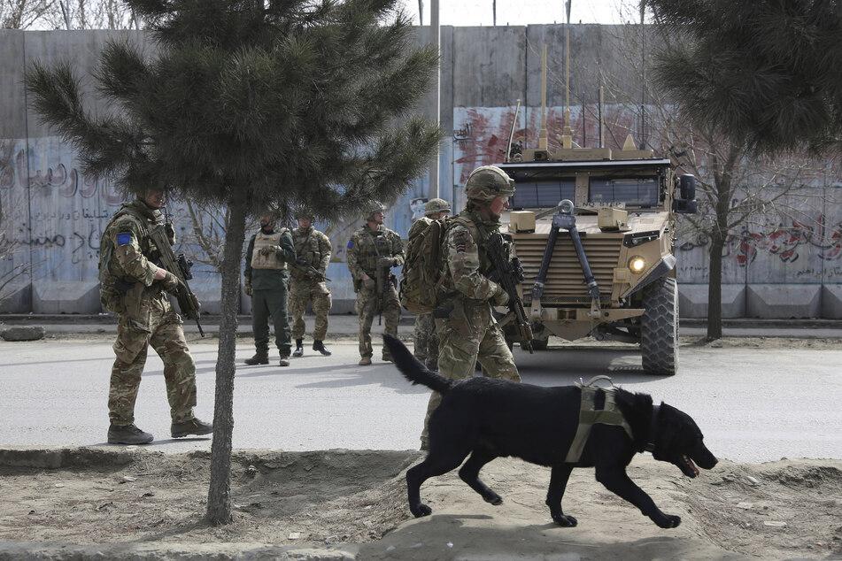 Ein Ex-Soldat setzte sich dafür ein, dass auch Hunde und Katzen aus Afghanistan evakuiert werden. Deswegen gab es jetzt Protest.