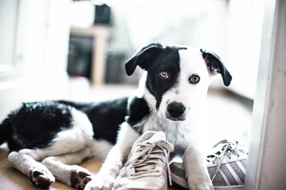 Pubertät beim Hund: Mit diesen Tipps erträgst Du das Pubertier