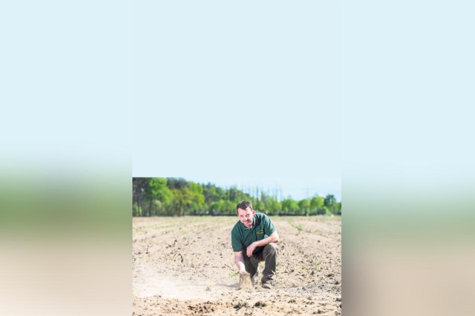 Landwirt Matthias Domanja (42) auf einem trockenen Feld. Sein familiengeführter Biohof in Hoske bei Wittichenau baut Gemüse und Getreide an. Zudem zieht er Tiere auf und verkauft hausschlachtenes Fleisch und Wurstwaren aus der eigenen Hoffleischerei.