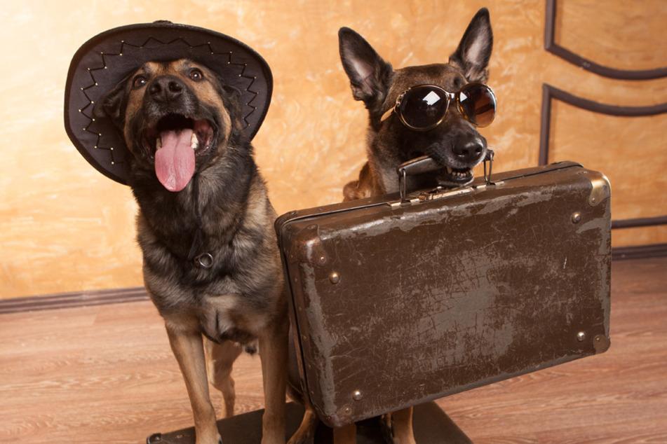 Auszeichnung: Deutschlands hundefreundlichstes Hotel ist in Bayern