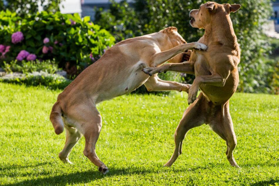 Ausgerissene Hunde beißen Frau in ihrem eigenen Garten zu Tode