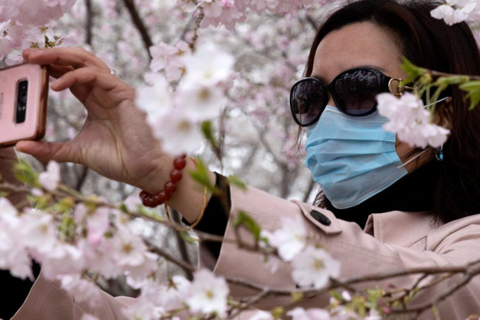 Eine Frau mit Mundschutzmaske und Sonnenbrille fotografiert sich mit ihrem Mobiltelefon inmitten von Kirschblüten.