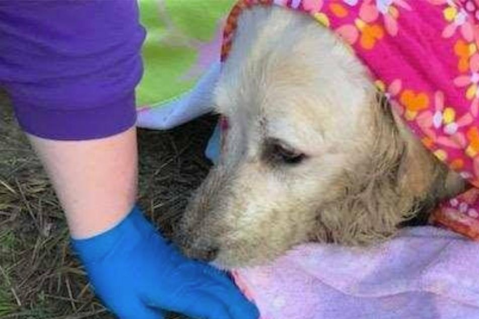Hund steckt bis zum Kopf im Schlamm fest