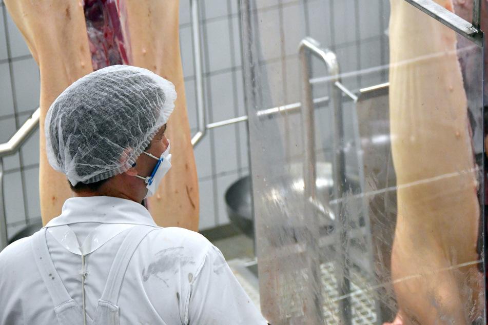 An seinem Arbeitsplatz durch eine Plexiglasscheibe von seinen Kollegen getrennt, zerlegt ein Mitarbeiter von Tönnies, der eine Mundschutz-Maske trägt, geschlachtete Schweine im Stammwerk des Betriebes.