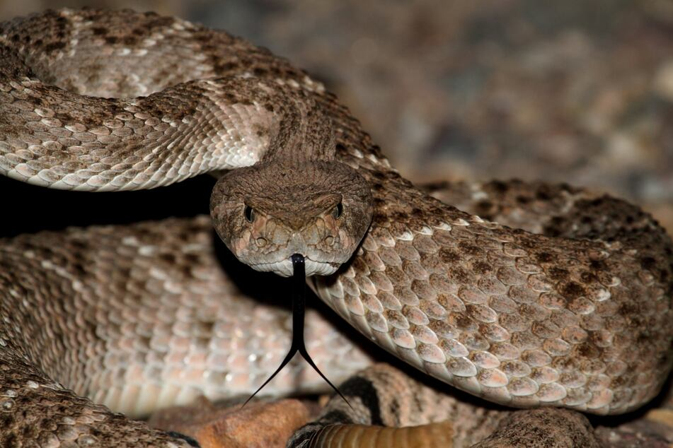 A four-foot snake supposedly nestled the patient's body (stock image).