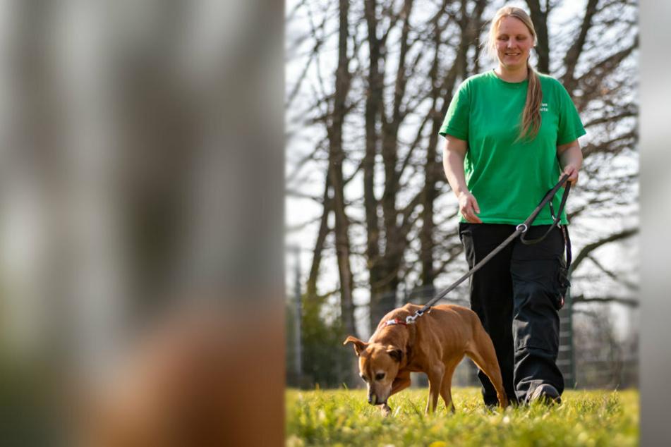 Mitarbeiterin Eva Warmschmidt (34) übernimmt das Gassigehen mit Hündin Jessi (13) im Tierheim am Pfarrhübel.