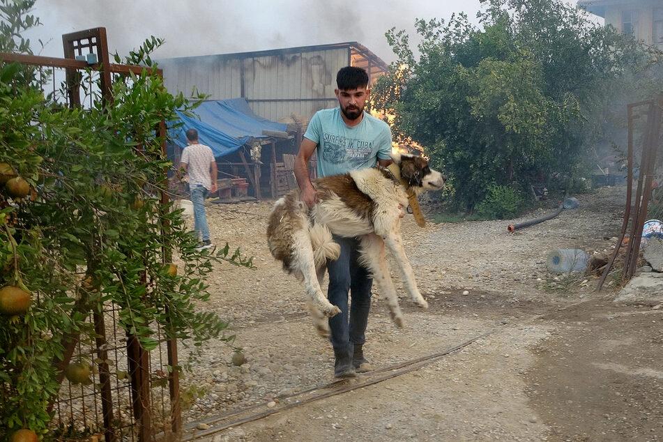 Immer mehr Anwohner, Touristen sowie Tiere müssen aufgrund der Brände evakuiert werden.