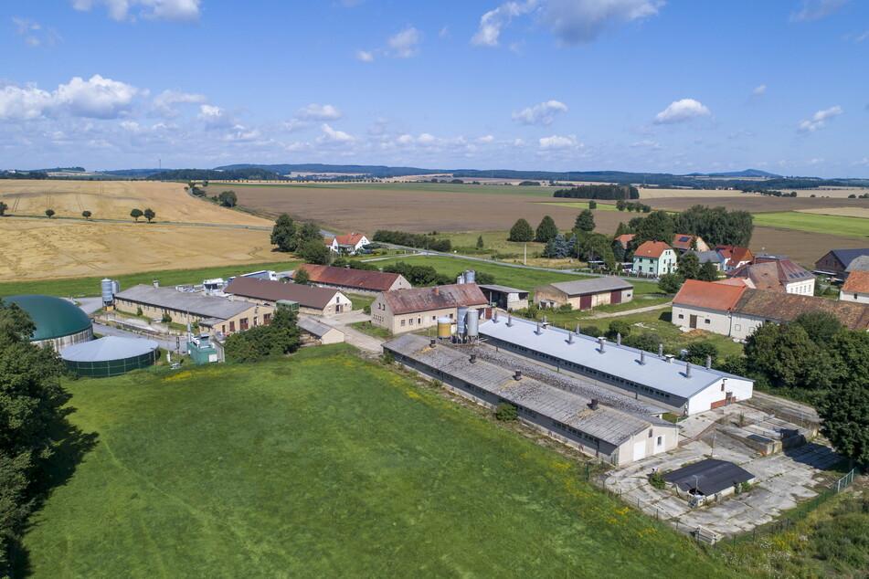 Gefährdet: Nimmt der Vermarkter die Ferkel wegen ASP nicht mehr ab, kann die Berthelsdorfer Agrar AG die Zucht dichtmachen.