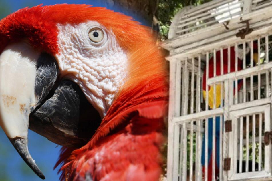 Papagei misshandelt und eingepfercht: Tierschützer erleben dann eine Überraschung