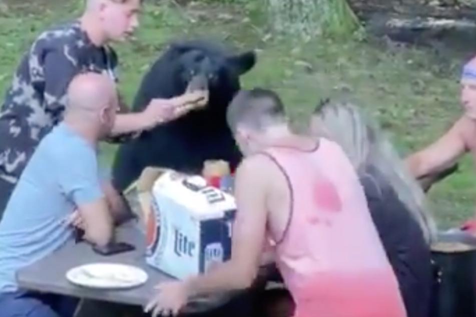 Nerven aus Stahl: Wandergruppe füttert wilden Bären mit Sandwiches