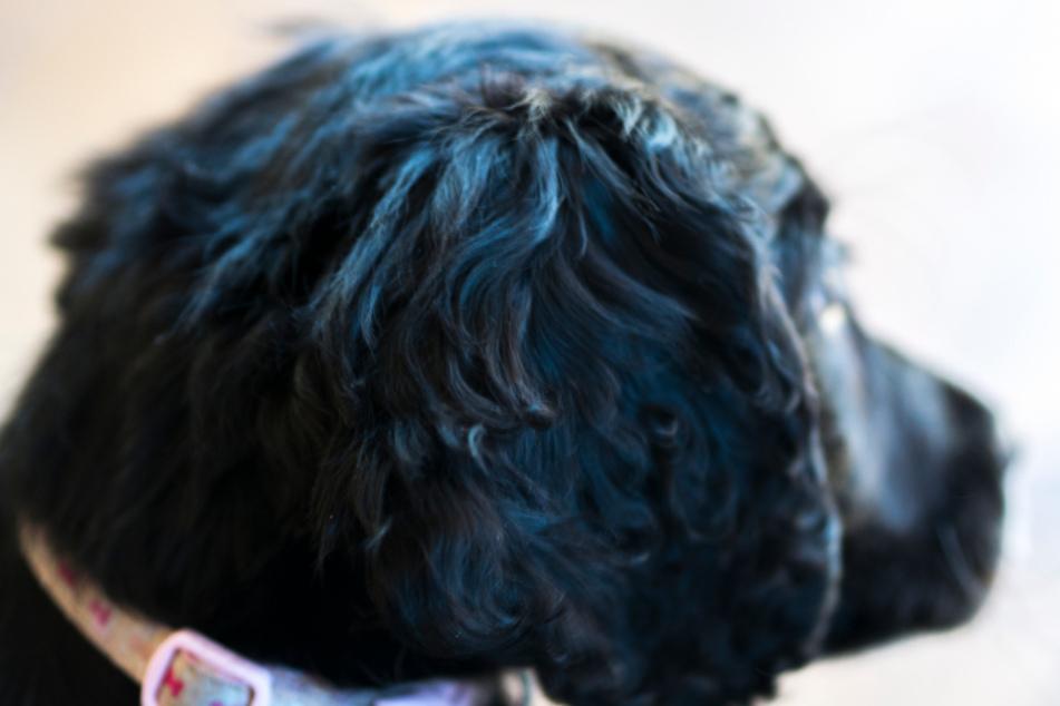 Mann befriedigt Hund: Doch ein Zuschauer macht alles noch viel schlimmer