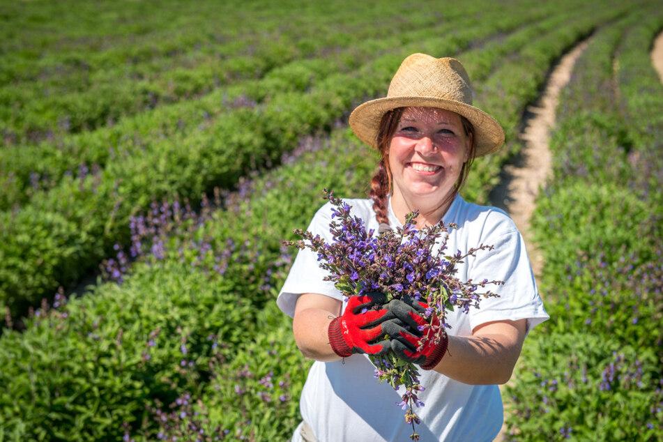 Bombastus-Mitarbeiterin Cindy Richter pflückt auf dem Feld ein Sträußchen lila Salbei.