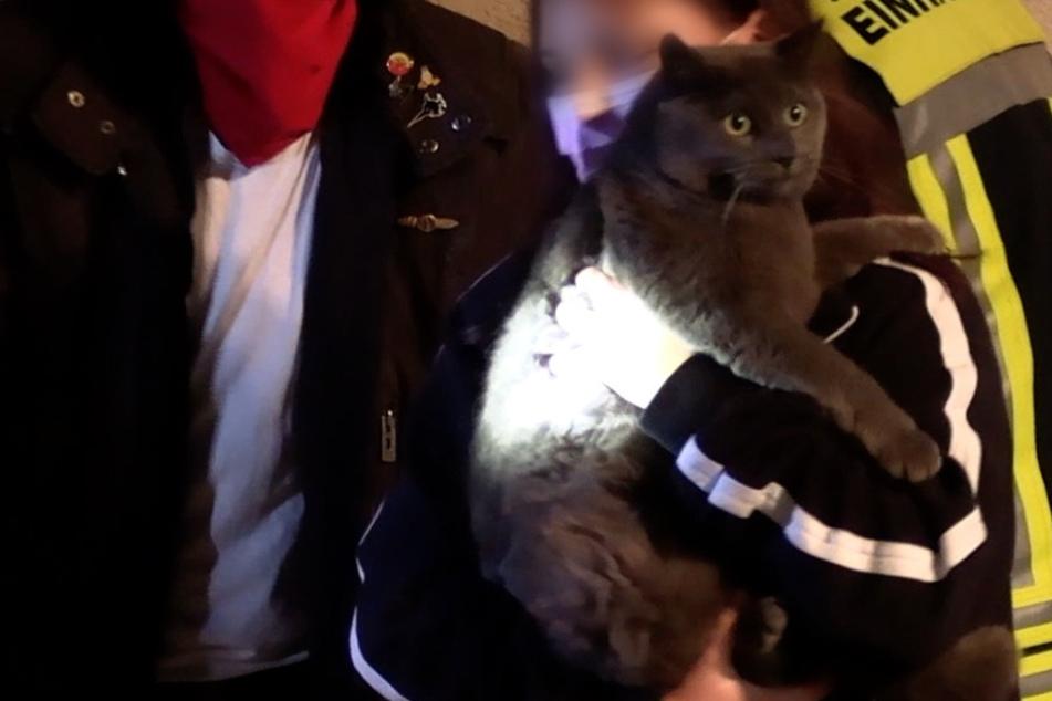 Kater stürzt Schacht hinab: Feuerwehr auf tierischer Rettungsmission