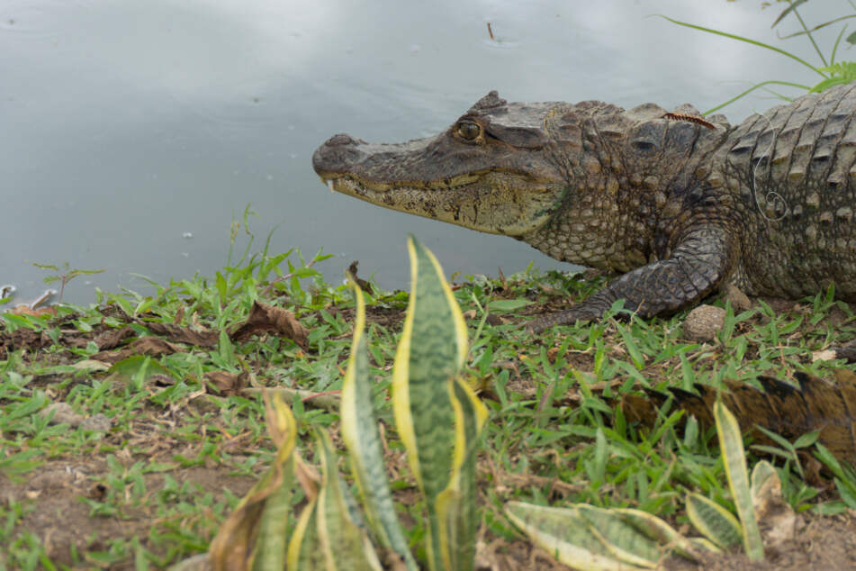 Fisherman killed in latest crocodile attack