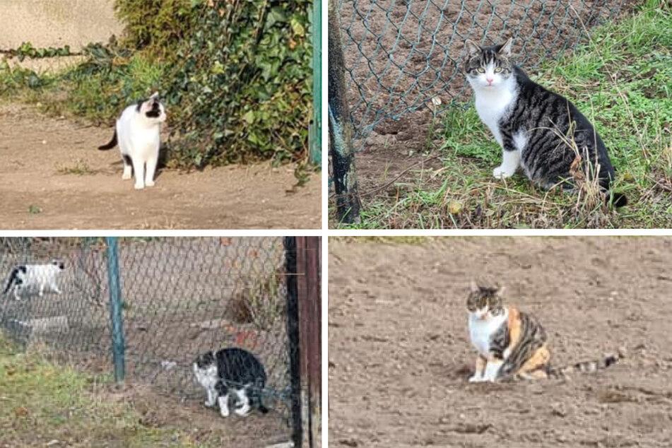Mutter von Auto überfahren: Nun sind diese süßen Streuner-Kitten ganz auf sich allein gestellt!