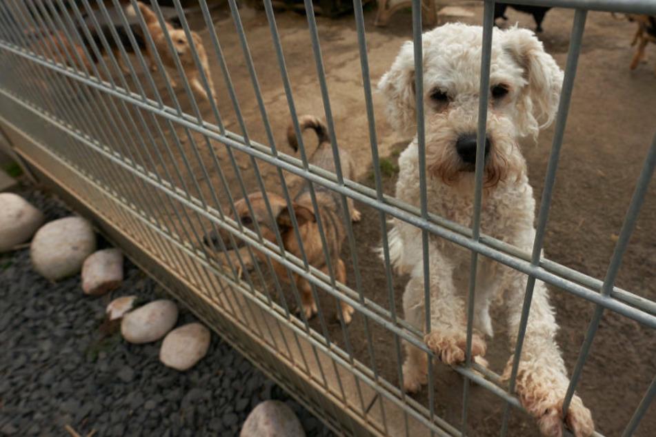 Tierschützer achten kritisch darauf, dass die Tiere nicht als Ersatz-Partner oder Lückenbüßer instrumentalisiert werden (Arcchivbild).