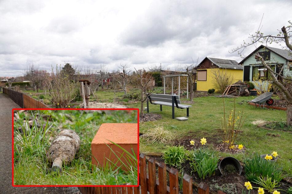 Auch in der Gartensparte Kirschbaum gab's einen Bombenalarm: Diese Stabbrandbombe (kleines Bild) buddelte eine Kleingärtnerin aus.