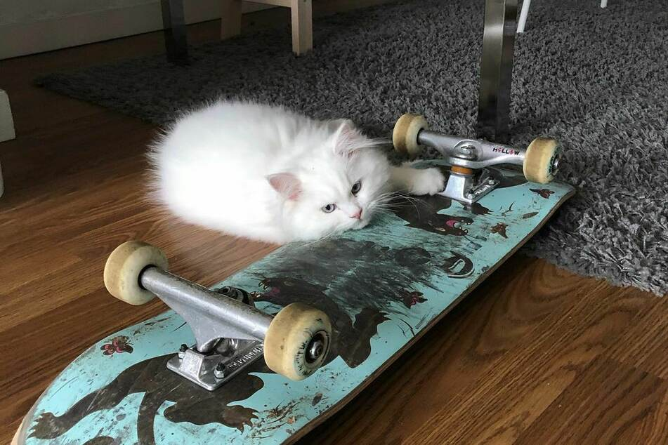 Yeti prefers to move around on a skateboard.