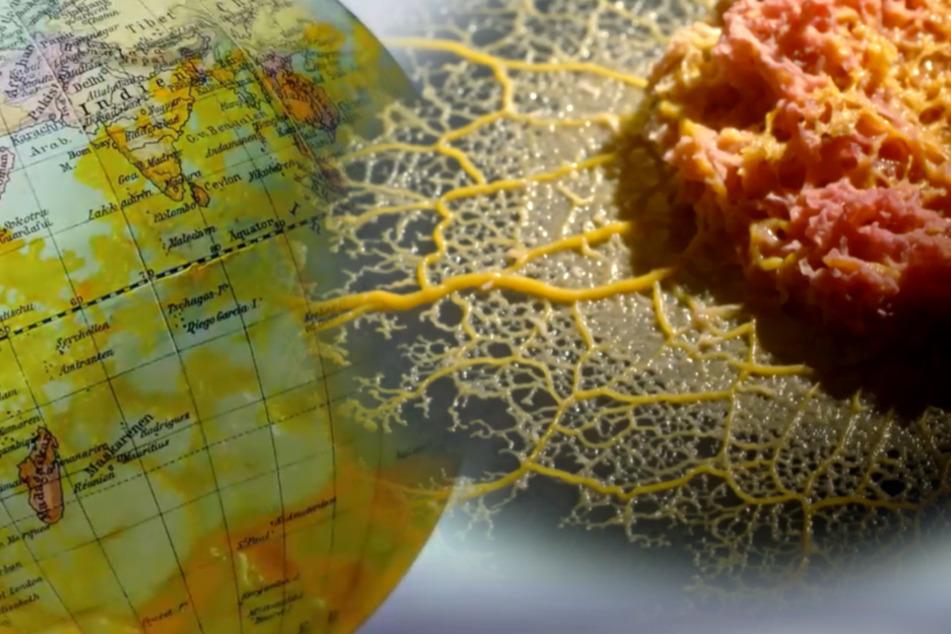Schleimiger Superorganismus breitet sich aus