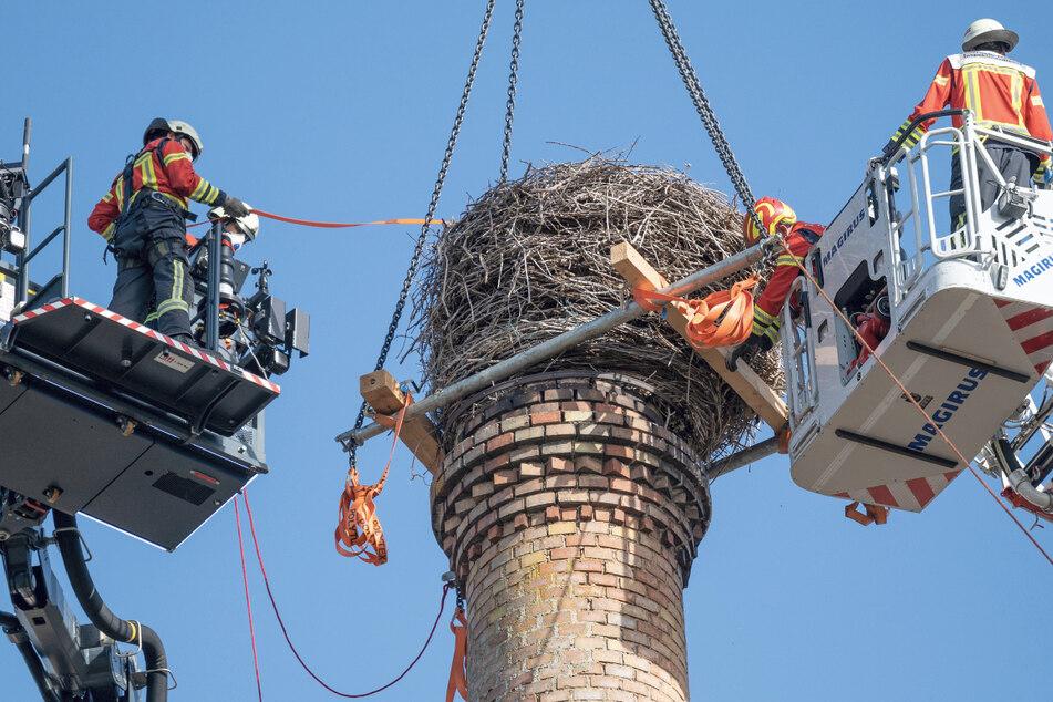 Tonnenschweres Storchennest absturzgefährdet: Feuerwehr rückt zum Abbau an
