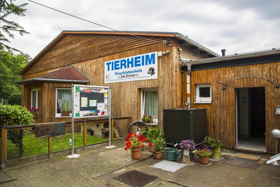 Im Tierheim Pirna werden auch Spenden für die kranke Hündin Nina gesammelt.