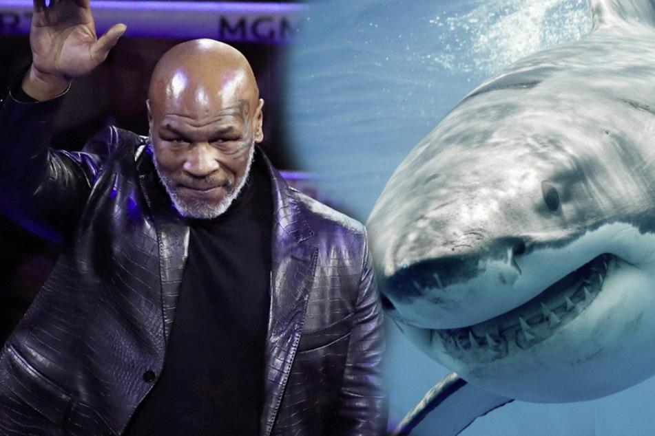 """Nichts für schwache Nerven: Mike Tyson mit Weißem Hai in einem """"Ring"""""""