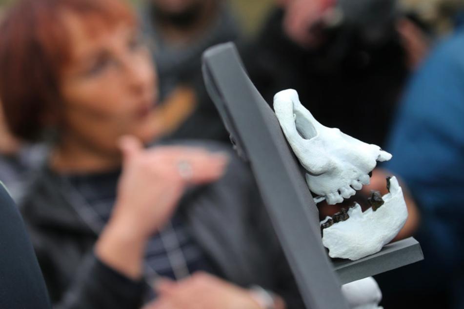 """Urmensch """"Udo"""" ist zurück: Menschlicher Vorfahre stellte Weltanschauung auf den Kopf"""